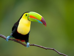 wildlife-bird-costa-rica