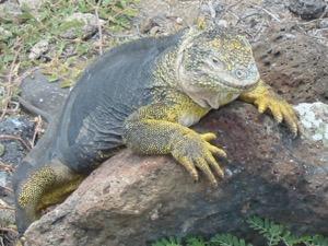 Photo of Komodo, Galapagos