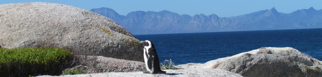 home-banner-penguin-africa