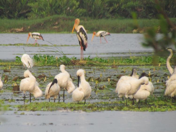 sri-lanka-birds