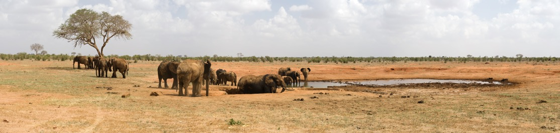 wildlife-elephants