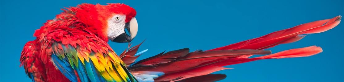 wildlife-macaw