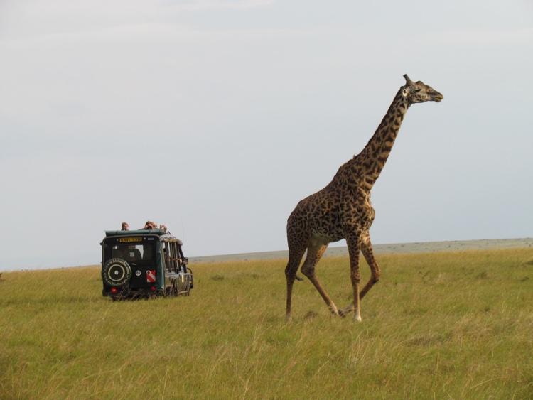 zambia-kenya-giraffe